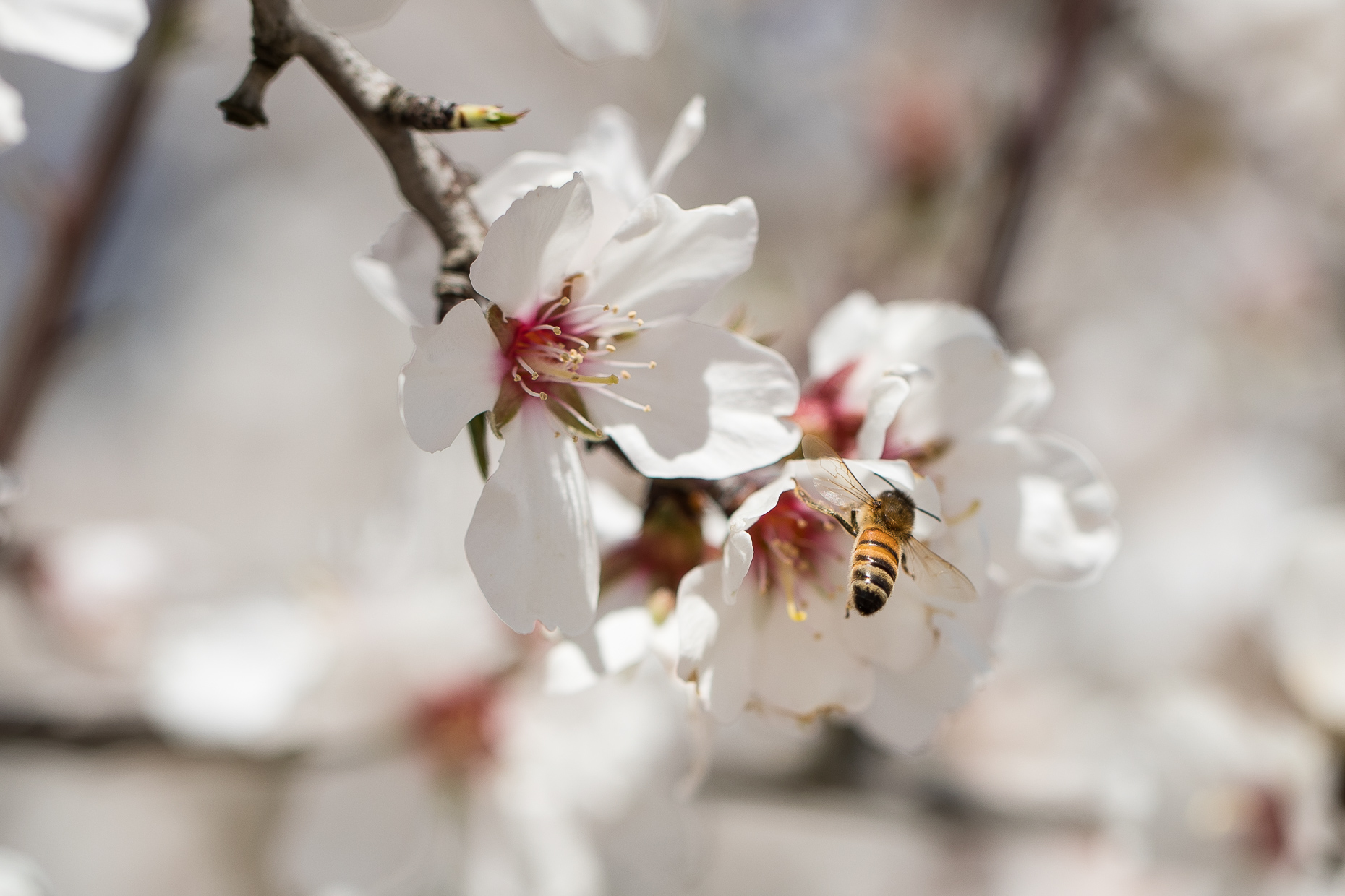 Haagen-Dazs-honey-bees-project-0482