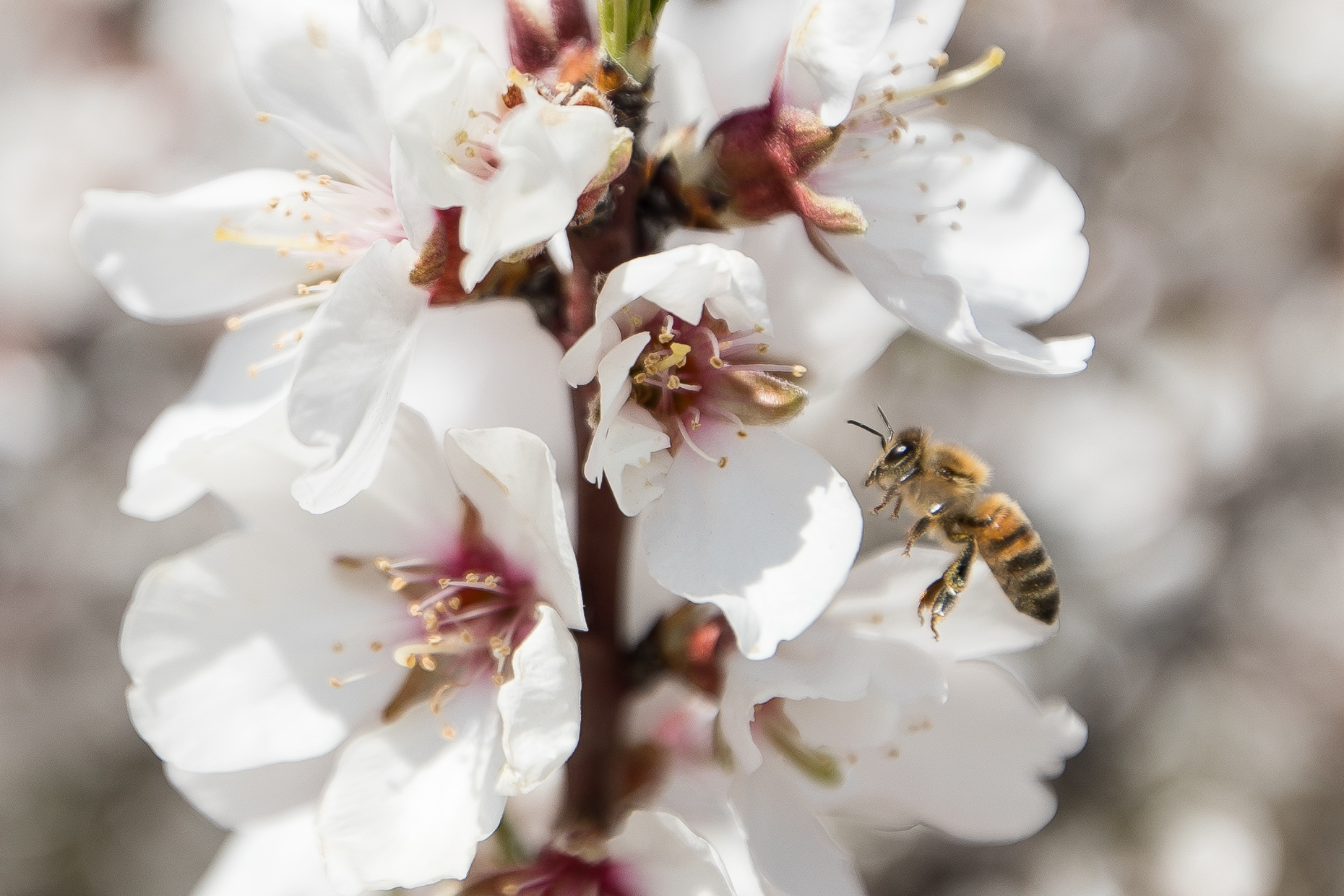 Haagen-Dazs-honey-bees-project-0556